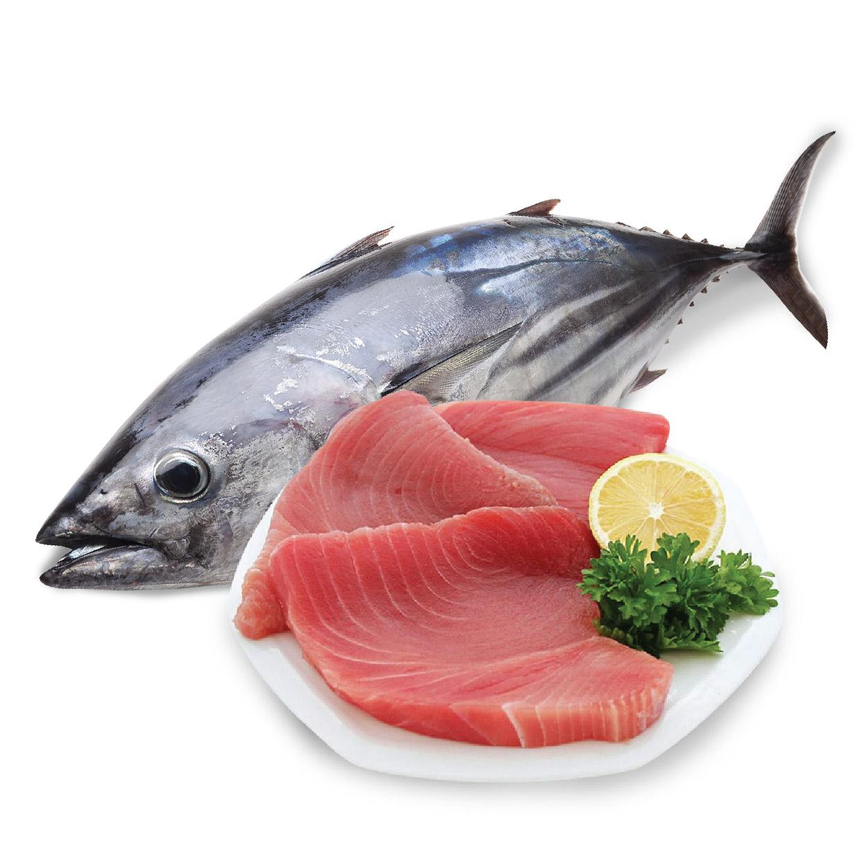 Kết quả hình ảnh cho cá ngừ